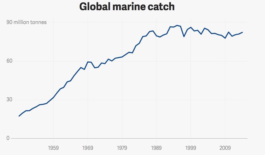 pesca marina