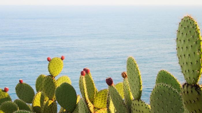 biogas cactus