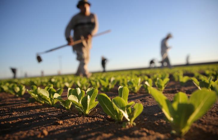 Puglia agricoltura lavoratori romeni Germania
