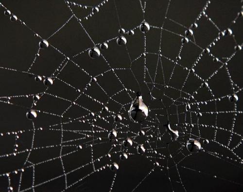 filo di ragno
