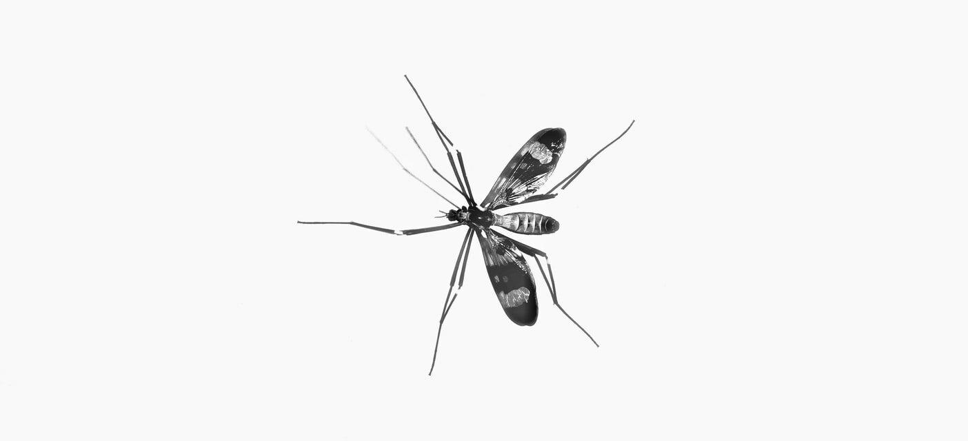 Vaccino Malaria